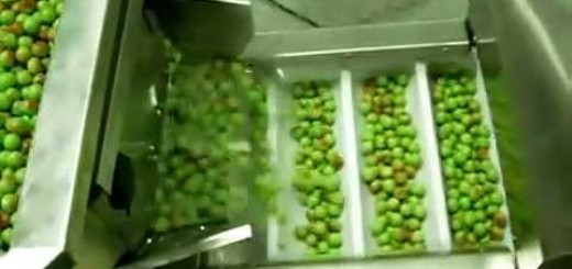 Green Beans Jars Filling machine, Candy Jar Filling machine , chocolate filling machine